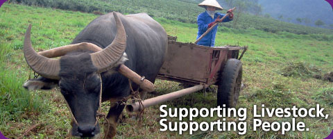 Supporting livestock, supporting people