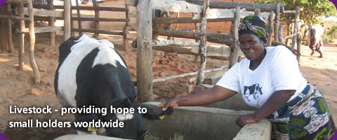 Livestock - providing hope to smallholders worldwide