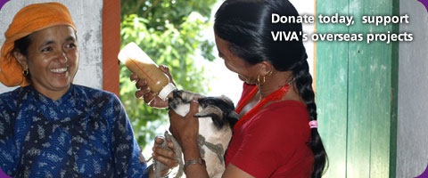 Donate today  support VIVA's overseas projects