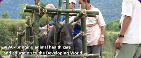 VIVA - bringing animal health care and education to the Developing World